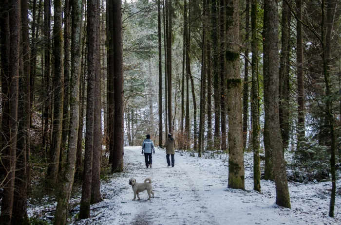 friends walking in woods ©Jack H Thompson