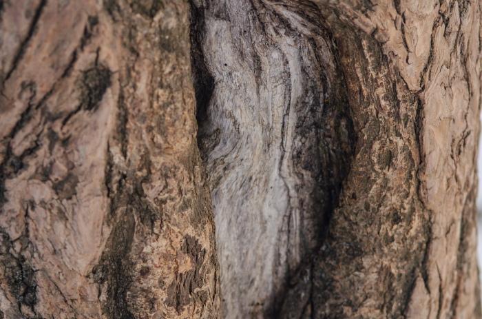 scarred tree trunk in Switzlerland© Jack H Thompson