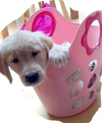 Lily in a basket