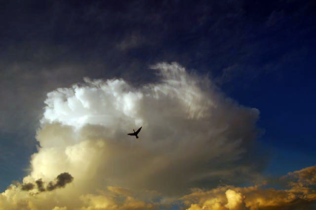 Bird in clouds by Jack H Thompson