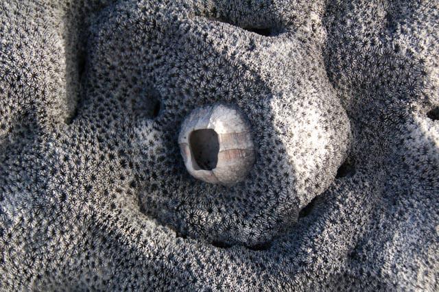 uplifted coral, Isabella, Galapagos , JHT