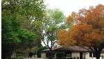 Florida oaks in spring