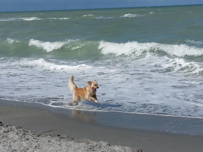 happy Lily in the surf
