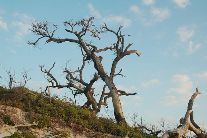 dead trees on sand dune by Jack H Thompson, Jr
