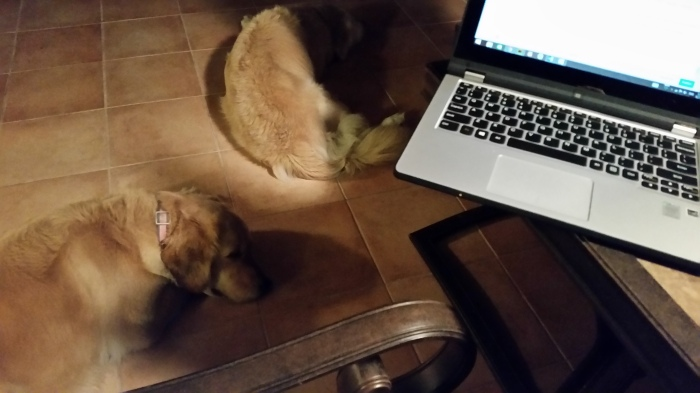 dogs on lanai by laptop