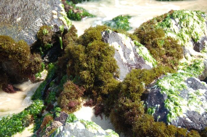 Maui rocks