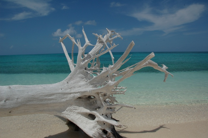 driftwood on Dry Tortugas