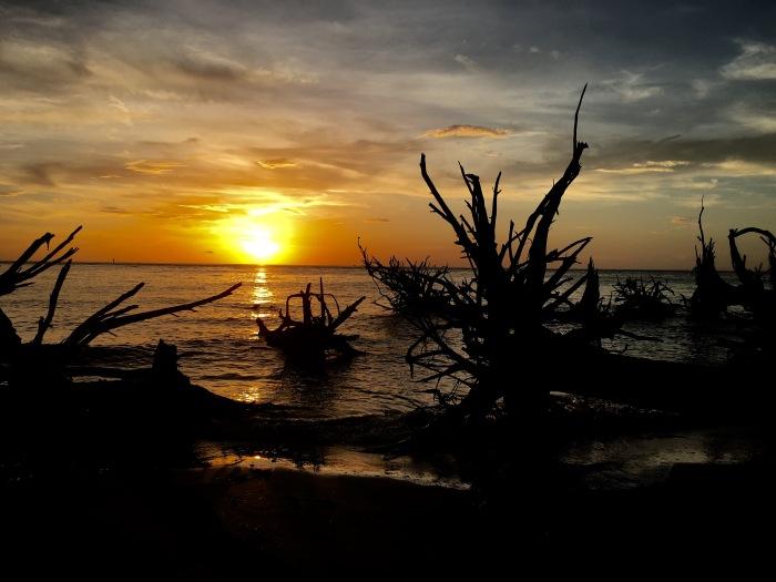 sunrise w driftwood