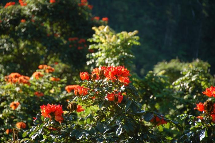 Maui gardens